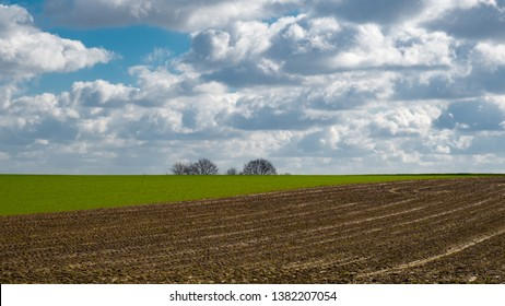 Landscape in Flandern typical with its fields and wide open spaces, billowy clouds in the sky and a group of trees on the horizon
