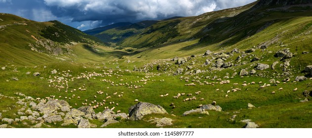 Landscape with a flock of sheep on the mountain