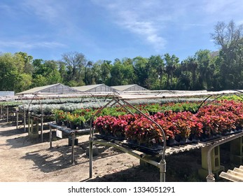 Landscape flowers are in bloom and ready for sale at a nursery in Florida.