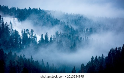 Landscape with fog among pine trees in mountain forest