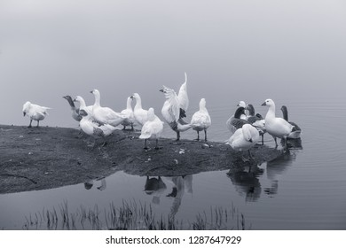 Landscape with fog and ducks in the natural park of the Barruecos. Extremadura Spain.
