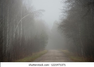 landscape - fog in  late fall