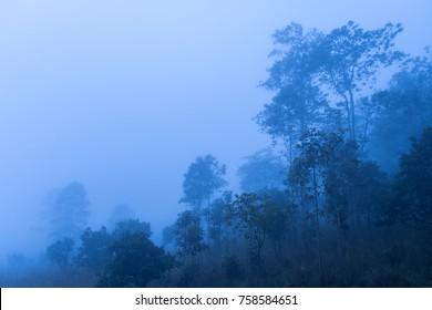 Landscape fog in morning before sunrise at Thung Salang Luang National Park Phetchabun,Tung slang luang is Grassland savannah in Thailand