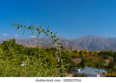 The landscape of the foothills of Kazakhstan. Mountains in the background. Blue sky. Ladybug on the foreground plant. Foothill vegetation. Green grass and trees.