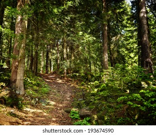 Landscape with a footpath through a pine forest