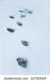 Landscape with a footprints in a snow, Arctic North Pole, Svalbard.