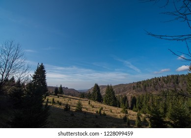 landscape of forest