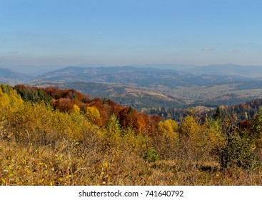 Landscape of the forest at the autumn. Panorama with orange and yellow colorful trees. Mountains view altitude. Dry yellow grass. Background of the Carpathian mountains in the Ukraine.