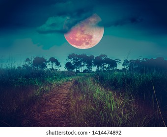 Landscape in forest and darkness sky super blood moon in the background, serenity nature background. Outdoors at nighttime. The moon taken with my own camera.
