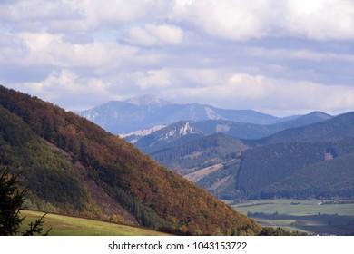 Landscape of forest during summer