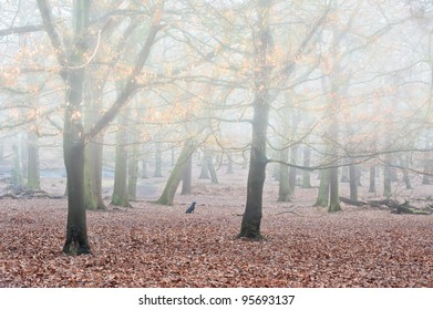 Landscape of forest in fog during Winter Autumn Fall with golden leaves shimmering in mist