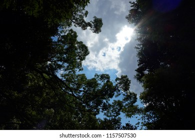 Landscape from the forest Nature sky