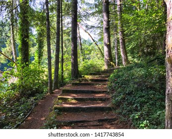Landscape of forest path leading up through ivy, trees, and sunlight in Frye Cove County Park in Washington