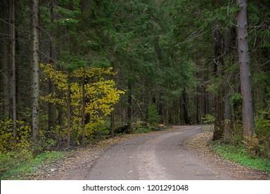 LANDSCAPE - forest road