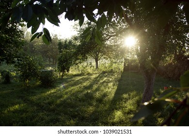 Landscape with forest, trees and sun. Sun backlit through the trees