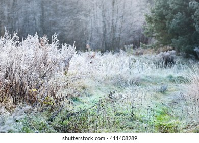 Landscape with the frozen plants and the hoar-frost