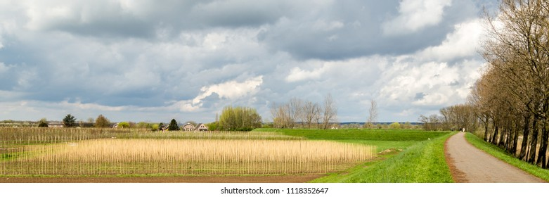 Landscape with fruit production aeres the Betuwe in the Netherlands