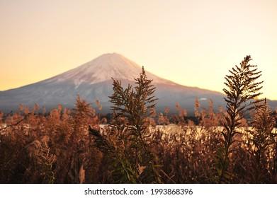 Landscape of Fuji Mountain at Lake Kawaguchiko During Sunset