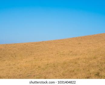 landscape golden field grass and blue sky