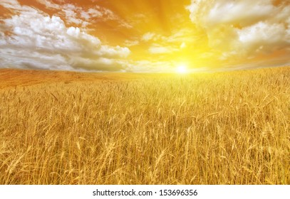 landscape with golden wheat field at bright sunset