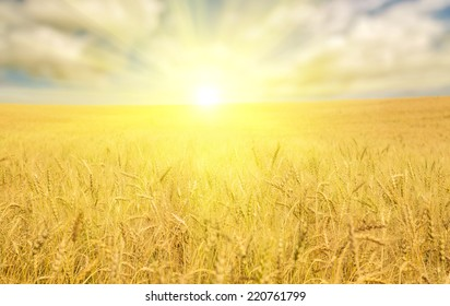 landscape with golden wheat field under blue sky and clouds