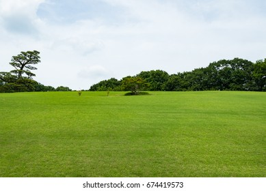 Landscape of grass field and green environment public park.