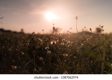 Landscape of grass flowers on top the hill with tropical forest & meadow grass field on soft green color in blur style. Beautiful panorama of grassland with silhouette sunset scene in twilight time