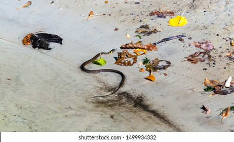 Landscape with the grass snake ashore