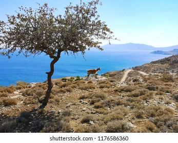 landscape in Greece