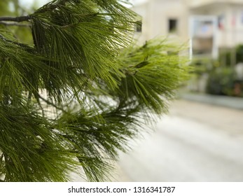 landscape, Greek Islands, background, Aegean Sea, background with pine branches