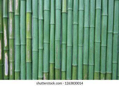 a landscape with green bamboo