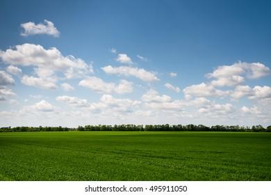landscape. Green field in sunny day