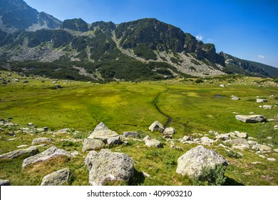 Landscape of Green forest in Pirin Mountain , Bulgaria