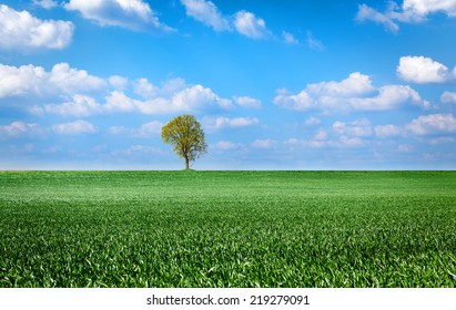 landscape with green grass field, sky and tree