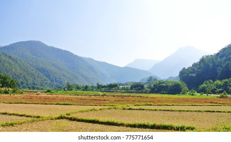 landscape of green grass mountain is natural background