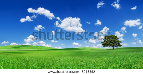 Landscape - green hills and lonely tree, the blue sky and white clouds