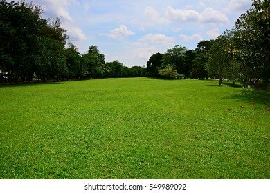 landscape of green lawn with trees
