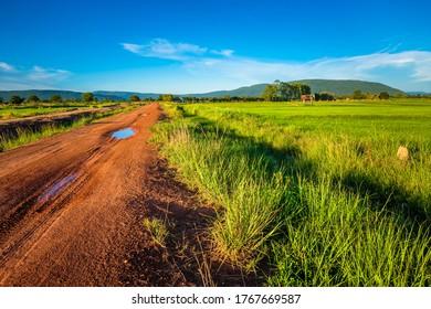 Paysage d'un champ de riz vert le long de la route de la terre, dans la campagne thaïlandaise