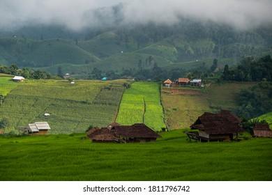 Landschaft von grünen Reisfeldern, Located Pabongpiang am Maejam, Chiangmai, Thailand.