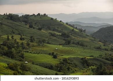 Landschaft von grünen Reisfeldern auf dem Berg Maejam, Chiangmai, Thailand.