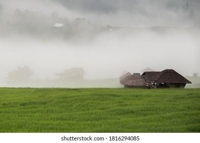 Landschaft von grünen Reisfeldern auf den Bergen mit Nebel in Maejam, Chiangmai, Thailand.