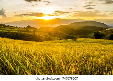 Landscape of green rice fields. Soft focus of rice farm landscape on day noon light.