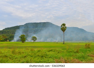 Landscape the green rice fields and sugar palm tree and mountain on cloud blue sky in Thailand.
