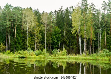 landscape of green trees, Augustow Canal