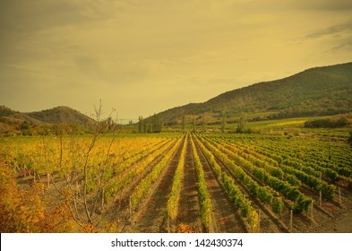 Landscape with green vineyards. Mountains at background