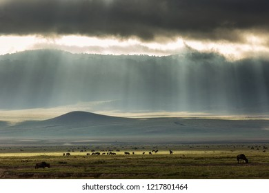 Landscape with group of wildebeest (gnu antelope) in  the middle of the Ngorongoro Park with beautiful rays of lights in background. Tanzania