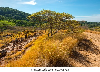 Landscape with a guanacaste tree inside the Rincon de la Vieja national park in Costa Rica.