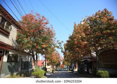 Landscape of Hakodate