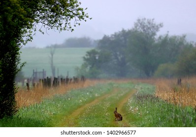 Landscape with hare  Taken in north germany, near danmark.