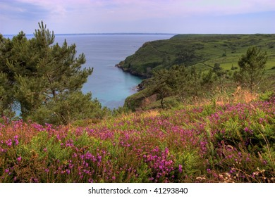 landscape with heather in brittany